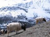 Around Annapurna (3)